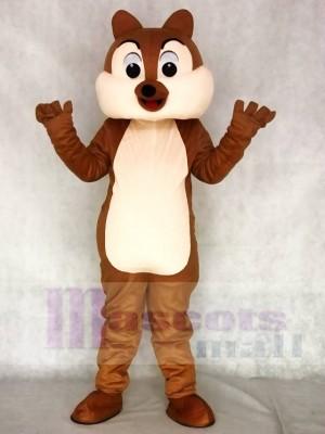 Lustiges Kostüm Tier der Eichhörnchen Jungen Maskottchen