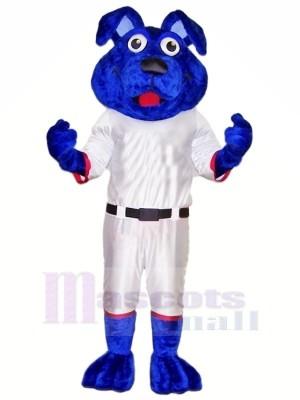 Blau Hund mit Weiß Passen Maskottchen Kostüme Tier