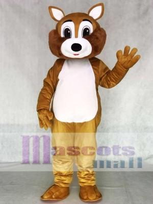 Erwachsene Eichhörnchen Maskottchen Kostüm mit weißem Bauch Tier