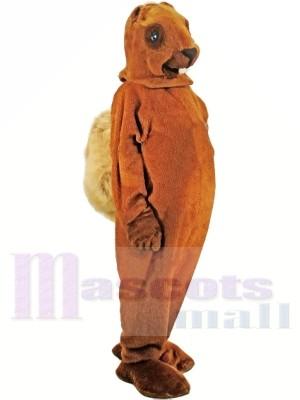 Ein mittelbraunes Eichhörnchen Maskottchen Kostüme
